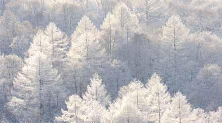 лес-лситв